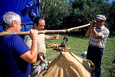 harvest weighing, Tilia fair at La Charce, Drome department, region of Rhone-Alpes, France, Europe