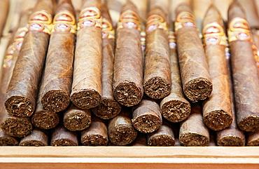A Bunch of Cuban Cigars, Little Havana, Miami, USA