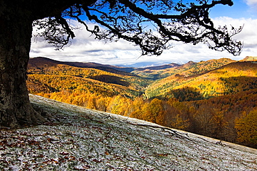 Irati forest in autumn from the Ollokia hill, Navarre Pyrenees, Navarra, Spain, Europe