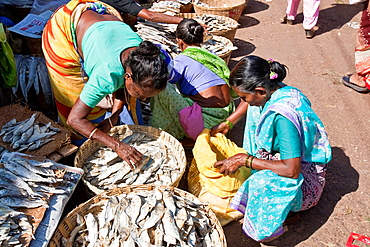 Women Selling Dried Fish, Mapusa Market, Goa, India