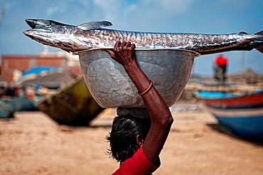 Woman carrying a big fish on her head. Puri beach, Orissa, India