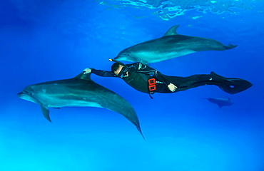 Freediver and Bottlenose dolphin Tursiops truncatus, Dolphinarium, Odessa, Ukraine, Europe