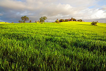 Fields in Don AÃ…lvaro Badajoz Extremadura Spain