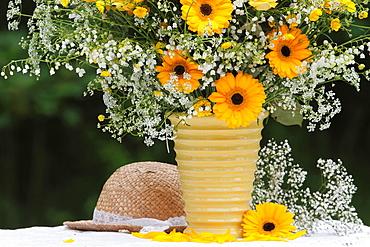 Barbeton daisy Sweden.