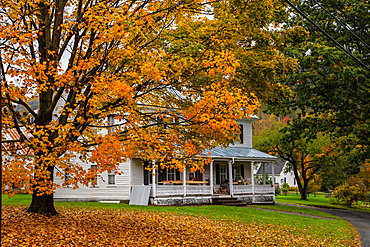 House with colorful tree in autumn in Sharon, Vermont, USA