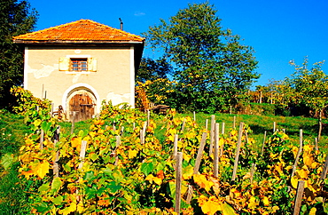 Old rural house used as wine cellar in vineyards near Bohunice, Hont region, Slovakia