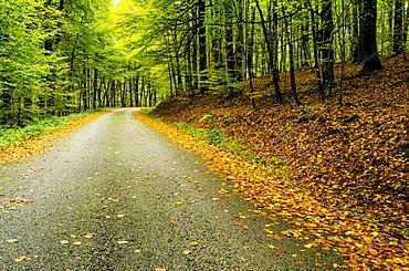 Road of Sorogain forest in Erro Valley, Navarre, Spain