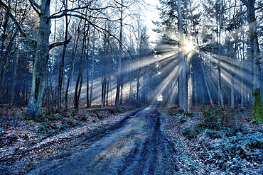 Sunlight pouring through treees at Foret de Bizy, near Vernon, Eure, Haute-Normandie, France