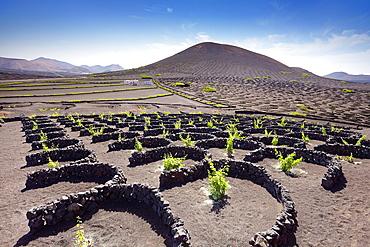 Lanzerote, Plantation of vines in volcanic ground in La Geria, Lanzarote Island, Canary Islands, Spain
