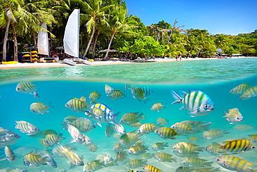 Thailand, half underwater sea scene of small fish at Ko Samet Island, Thailand, Asia