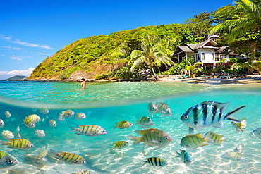 Half underwater sea view of small fish at Ko Samet Island, Thailand, Asia