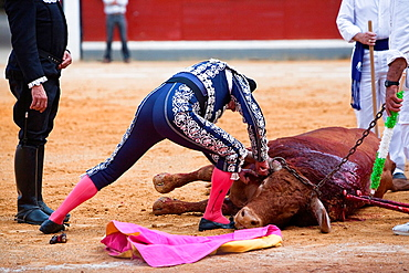 Bullfighter by cutting off the ear of the bull as a trophy, Spain