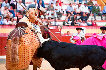 Picador bullfighter, lancer whose job it is to weaken bull's neck muscles, Spain