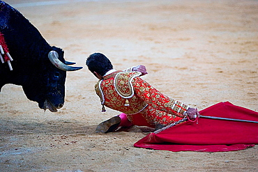 the Spanish toreador The Fandi of knees very close between the horns of the bull, Spain