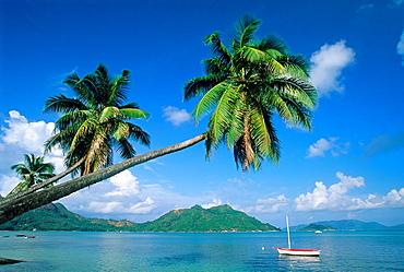 Praslin island, Republic of Seychelles, Indian Ocean
