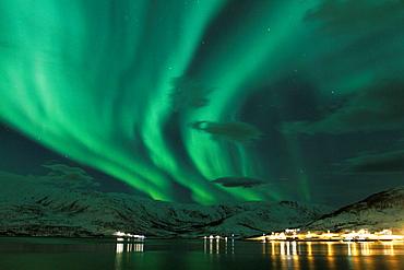Northern Lights in Norway. - 817-440805
