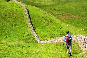 A hiker walking alongside Hadrians Wall near Crag Lough in Northumberland, England, UK.