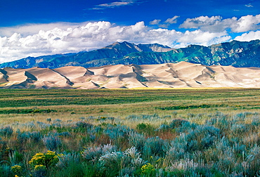 Shadows play on the distant Great Sand Dunes, while brush play in a breeze in the foreground.