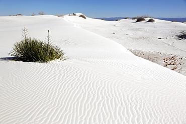 White Sands National Monument. Alamogordo. New Mexico. USA.