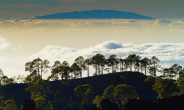 Clouds sea. Teide National Park. Tenerife island, Canary Islands, Atlantic Ocean, Spain.
