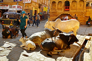 Street scene with walking tourist and cows laying on the street, Jaisalmer, Rajasthan State, India.