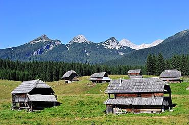 Herds in the Triglav National Park, Julian Alps. Slovenia