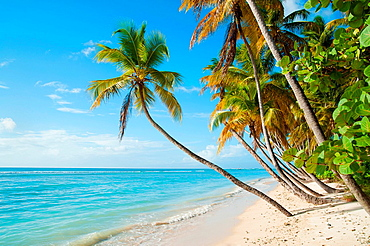Beach, sea and palm trees, Pigeon Point, Tobago