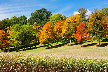 Fall Foliage Trees On Hillside Indiana County Pennsylvania.