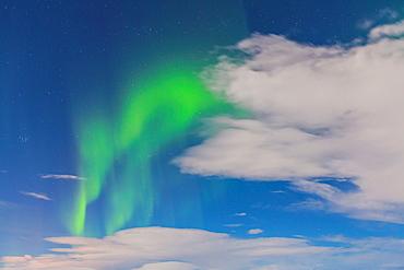 Northern lights, Myvatn, North Iceland, Iceland, Europe.