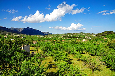 Caimari, Sierra de Tramontana, mallorca, Balearic Islands, Spain, europe.