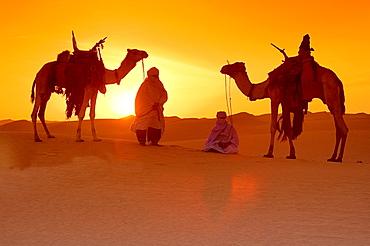 Tuareg, Tuareg and her Camel, Tuareg Caravan, Sunset, Libyan Desert, Libyan Arab Jamahiriya.