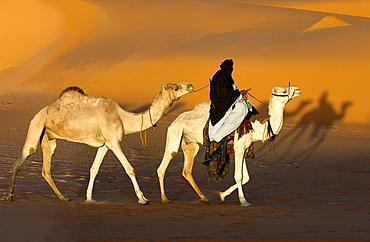 Tuareg, Tuareg is riding a Camel, Tuareg Caravan, Libyan Desert, Libyan Arab Jamahiriya.
