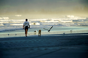 Ohope Beach, Man is Walking with his Dog on the Beach, New Zealand.