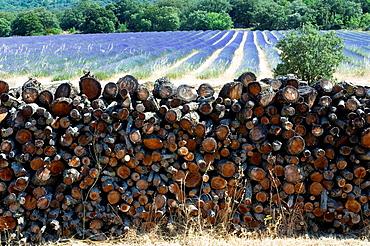 Pile of Wood, Lavender Field, Landscape Scenery, Provence, France.