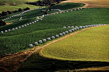 Hay Bales, lush Meadows, Landscape, Scenery, New Zealand.