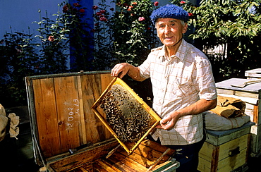 Jala Abad, honeycombs, inside of a bee house, hobby beekeeper, Kyrgyzstan.