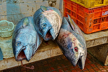 giant tuna for sale in the market of Fort Cochin (Kochi), Kerala, India.