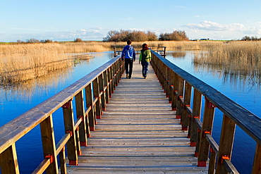Daimiel National Park, in Ciudad Real province. Castilla-La Mancha, Spain.