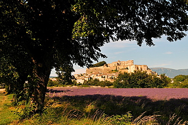 France Drome Provence. Lavender fields around the village of Grignan