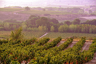 Vineyards around the town of San Vicente de la Sonsierra, on the border of La Rioja and the Basque Country. Spain, Europe.