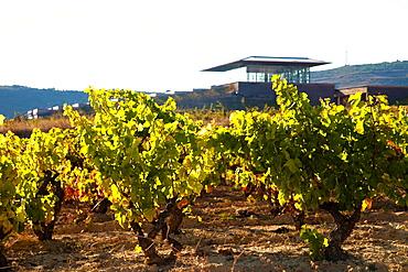 Bodegas Baigorri wine cellar, Samaniego, La Rioja, Spain, Europe.
