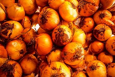 Onion, Fondon.Alpujarras, Almeria province, Andalucia, Spain.