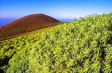 View of La Dehesa, El Hierro, Canary Island, Spain, Europe.
