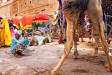 Gangaur festival,camels inside the Fort,Jaisalmer, Rajasthan, India.