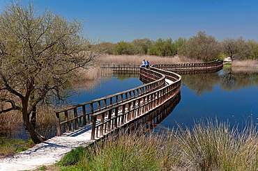 Tablas de Daimiel National Park, Ciudad Real-province, Castilla, La Mancha, Spain.