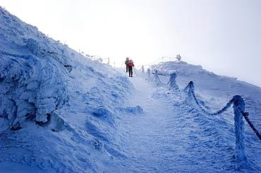 Hikers climbing a frozen side of a mountain, Karkonosze mountains, Poland.