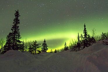 Aurora borealis, Northernlight over winter forestroad in Gallivare in Swedish lapland.