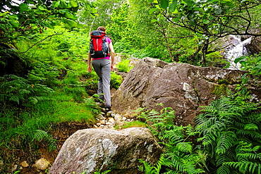 A female hiker walking up amongst the bracken, boulders and trees at Dovedale Beck in the Lake District, Cumbria.