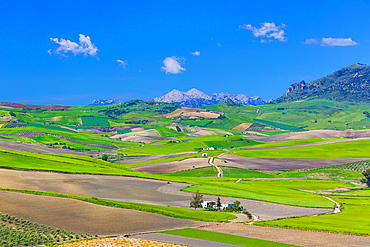 Spain, Andalucia Region, Cadiz Province,near Ronda City.