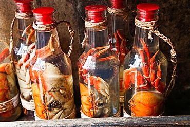 Crabs in a bottle, Pelourinho, Salvador, Bahia, Brazil.